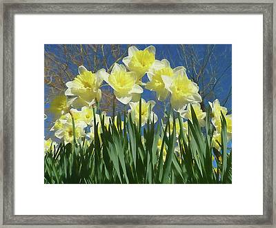Framed Print featuring the photograph Garden Of Daffodils by Donna Kennedy