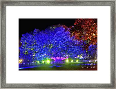 Framed Print featuring the photograph Garden Of Light By Kaye Menner by Kaye Menner