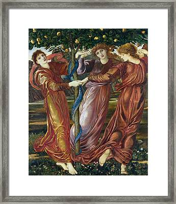 Garden Of The Hesperides Framed Print by Sir Edward Burne Jones