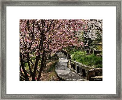 Garden Path No. 2 Framed Print