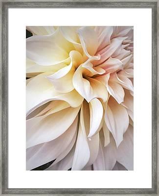 Garden Queen 1 Framed Print