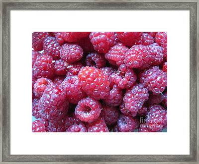 Garden Rasberries Framed Print by Judy Via-Wolff