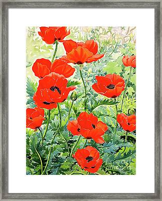 Garden Red Poppies Framed Print by Christopher Ryland