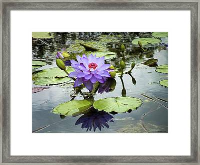 Garden Reflaections Framed Print