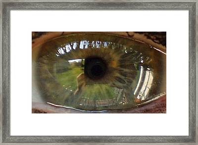Garden Reflected In Eye Framed Print by Shirley anne Dunne