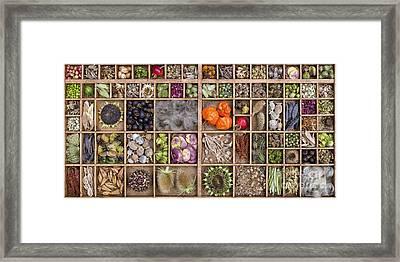 Garden Seed Pods Framed Print