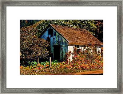 Garden Shed Framed Print by Helen Carson