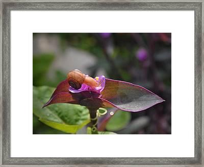Garden Snails Wandering Framed Print