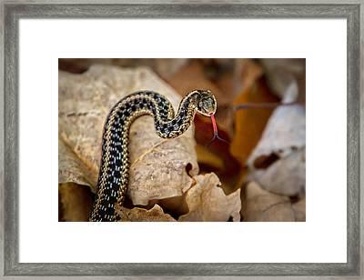 Garden Snake Framed Print