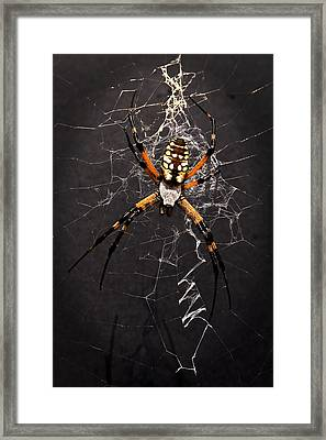 Framed Print featuring the photograph Garden Spider And Web by Tamyra Ayles