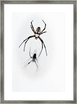 Garden Spider With Shadow Framed Print by Tamyra Ayles