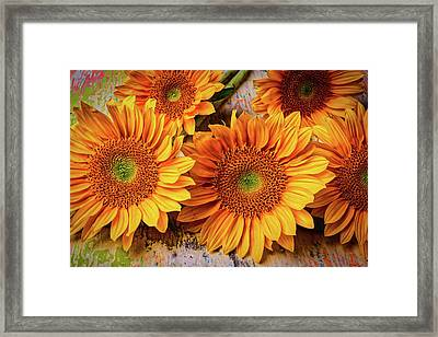 Garden Sunflowers Framed Print by Garry Gay