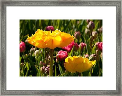 Garden Sunshine Framed Print by Charlet Simmelink
