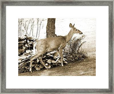 Framed Print featuring the photograph Garden Visitor by Betsy Zimmerli