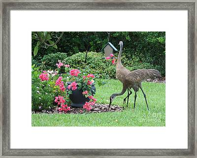 Garden Visitors Framed Print by Carol Groenen