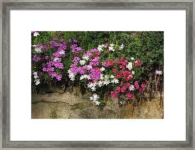 Garden Wall Framed Print