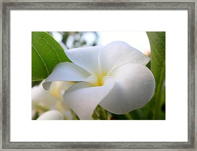 Garden White Framed Print