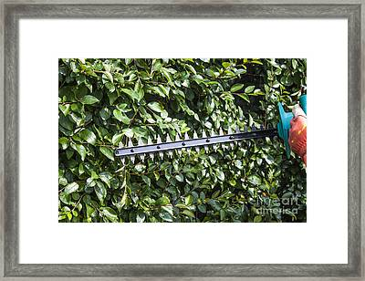Gardener Trimming Bushes Framed Print