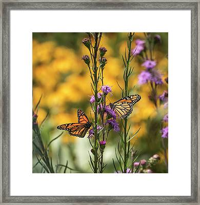 Gardeners Dream Framed Print by Thomas Young