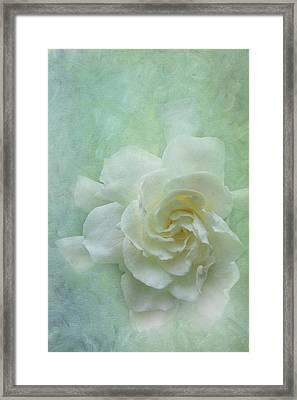 Gardenia Framed Print by Catherine Alfidi