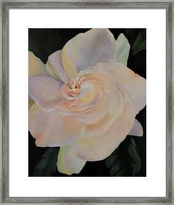 Gardenia Framed Print