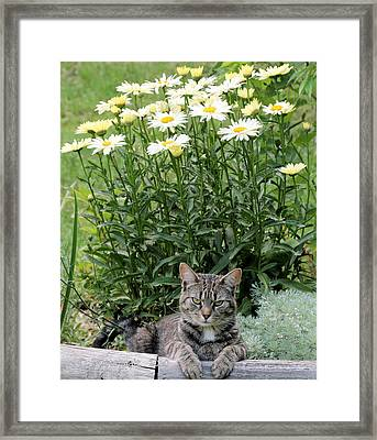 Garfield And Broadway Light Daisies Framed Print
