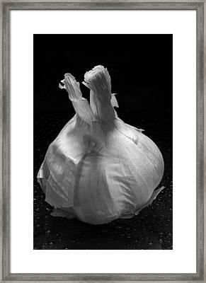 Garlic Bulb B W Framed Print