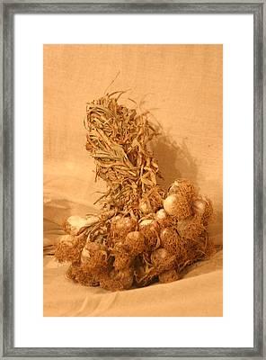 Garlic Time 3 Framed Print by Jez C Self