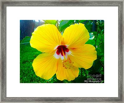 Framed Print featuring the photograph Garnet And Gold by Marty Gayler