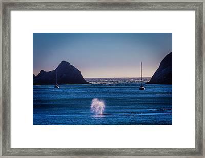 Gary Whale Breaching Framed Print by Garry Gay