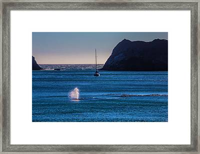 Gary Whale I Blue Water Framed Print by Garry Gay