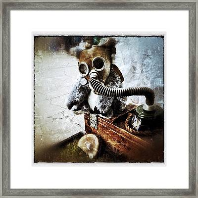 Gas Mask Koala Framed Print by Natasha Marco