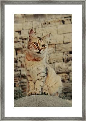 Gata Rhodes Framed Print