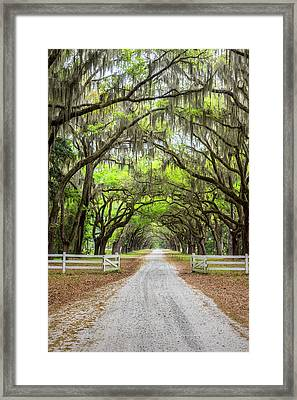 Gated Wormsloe Plantation Framed Print