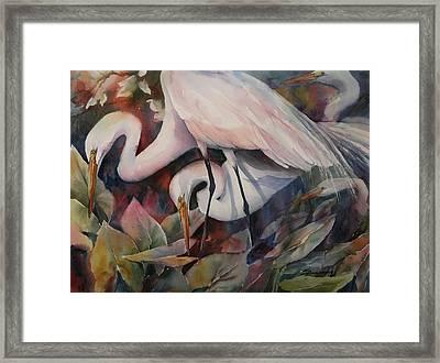 Gathering Egrets Framed Print by Sue Zimmermann