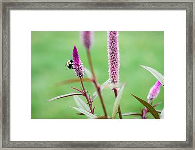 Framed Print featuring the photograph Gathering For The Family by Steven Santamour