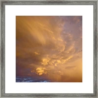 Gathering Gold Framed Print by Bonnie See