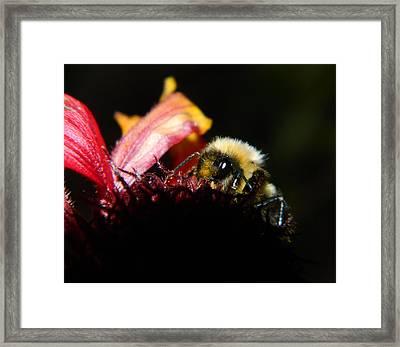 Gathering Framed Print