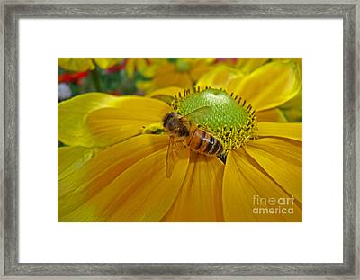 Gathering Nectar Framed Print
