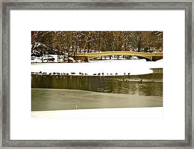 Gathering Of Ducks Framed Print