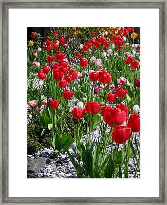 Gathering Of Joy Framed Print