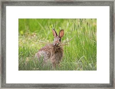 Gathering Rabbit Framed Print by Terry DeLuco
