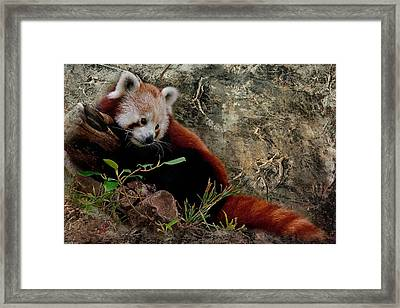 Gathering Thoughts Framed Print by Heather Thorning