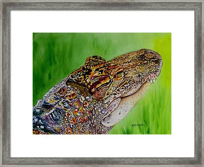 Gator Ali Framed Print by Maria Barry
