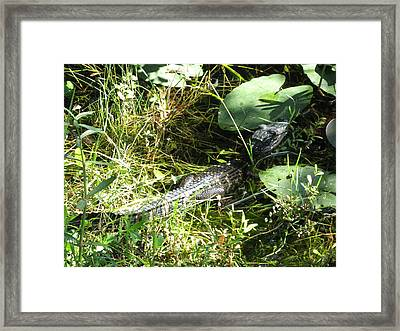 Gator Baby Framed Print by Christiane Schulze Art And Photography