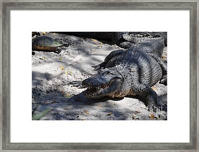 Framed Print featuring the photograph Gator Bait by John Black