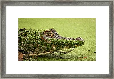 Gator Camo Framed Print