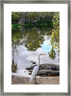 Gator Fam Framed Print