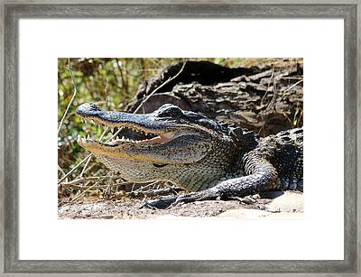 Framed Print featuring the photograph Gator Grin  by Christy Pooschke