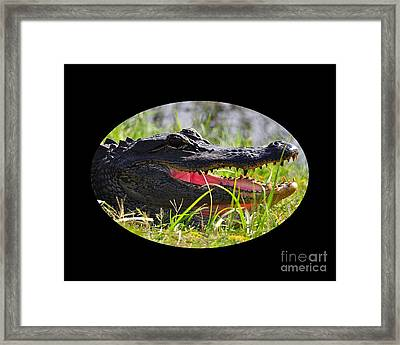 Framed Print featuring the photograph Gator Grin .png by Al Powell Photography USA